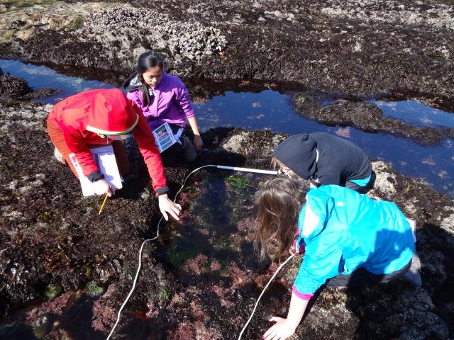 Students exploring tidepools